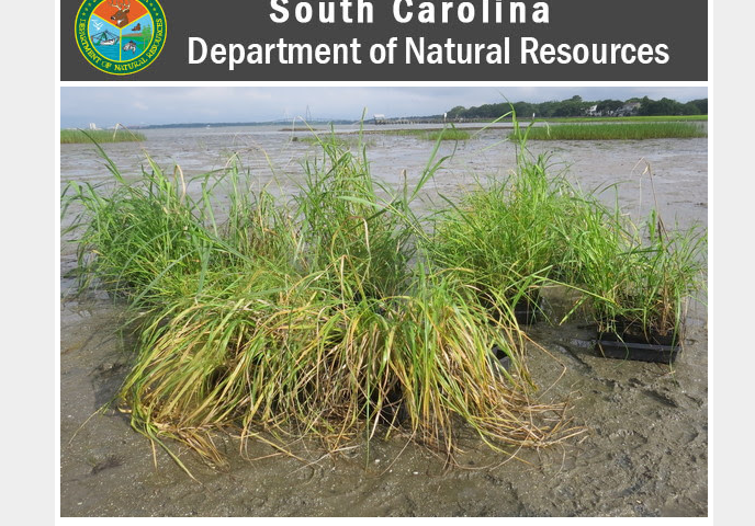 scdnr-salt-marsh-restoration-project