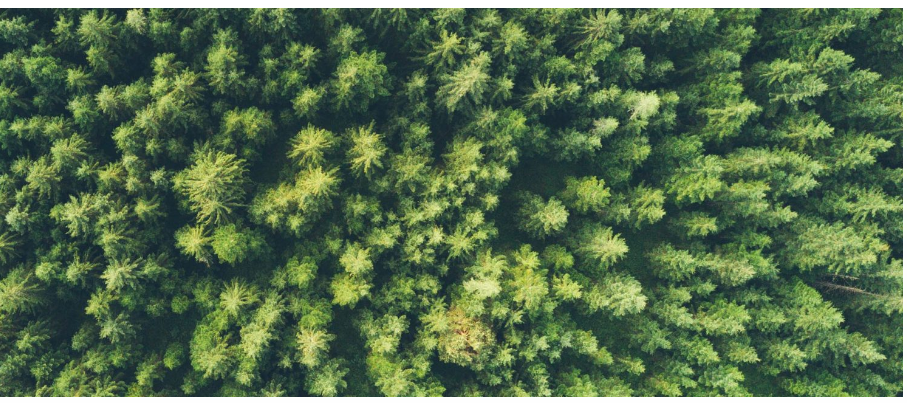 Forest Drone Pic