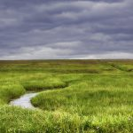 A Salute to Salt Marshes