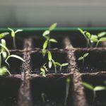 DIY Urban Vegetable Garden Guide