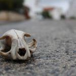 VIDEO: The Mammal Skull ID Challenge