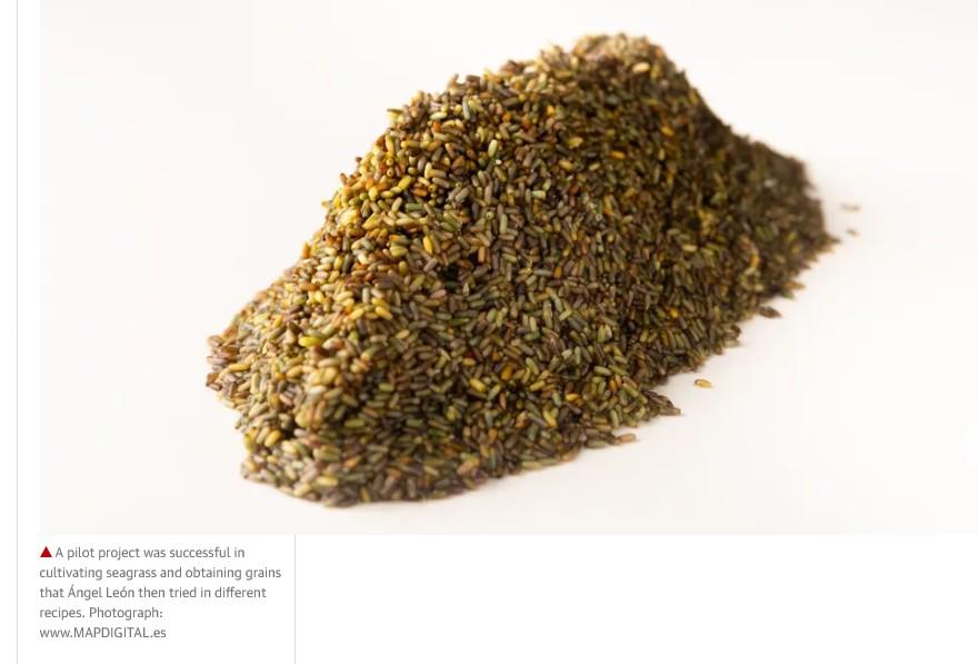 Screenshot_The rice of the sea_grains