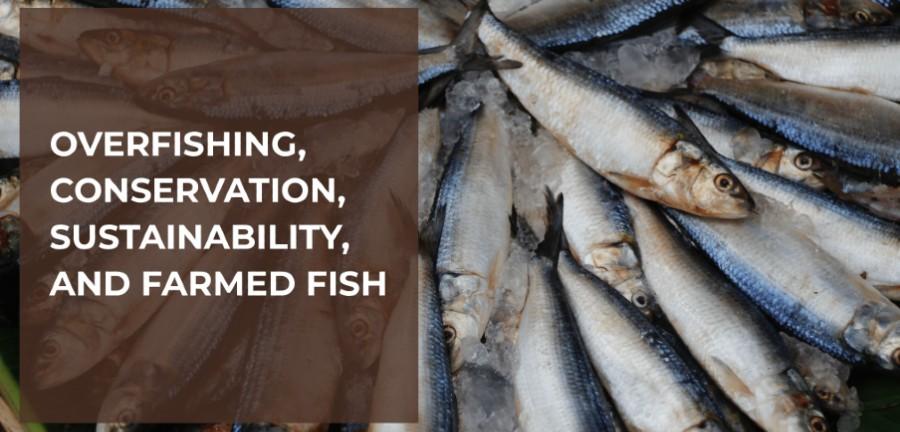 Screenshot Overfishing - YourBassGuy