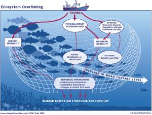 ecosystem-overfishing