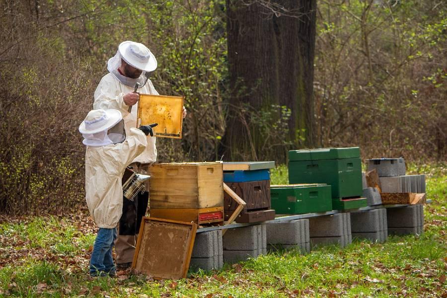 beekeepers-at-work
