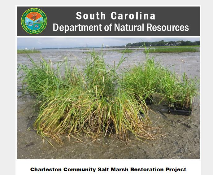 scdnr-salt-marsh-restoration-project