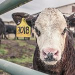 Study: Climate Change and Meat Consumption