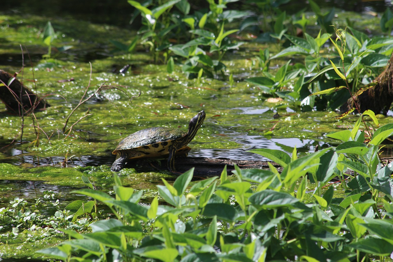 river-turtle-alabama