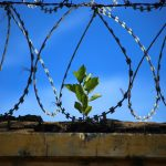 Transforming an Infamous Prison into a Green Oasis