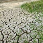 Dragging our Feet on Climate Change Could Cost us Trillions