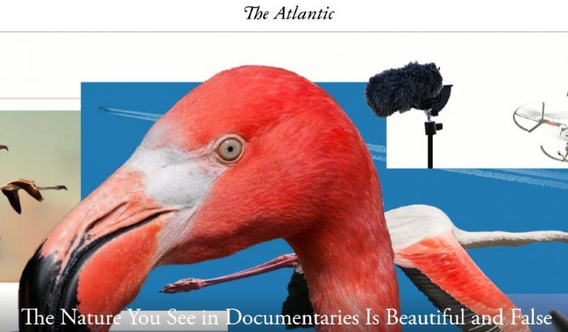 Atlantic-NatureDocumentaries-Screenshot