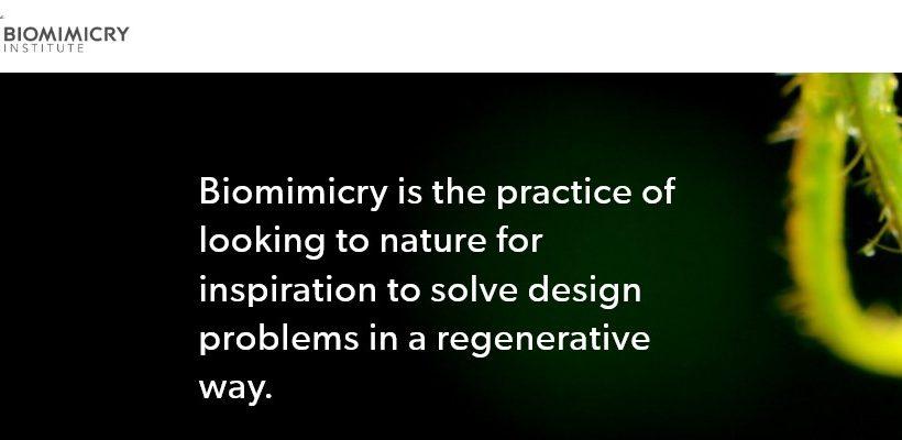 Screenshot_Biomimicry Institute