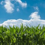 STUDY: Corn Ethanol Reduces Carbon Footprint & Greenhouse Gases