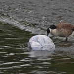 Canada Now Considers Plastic 'Toxic'