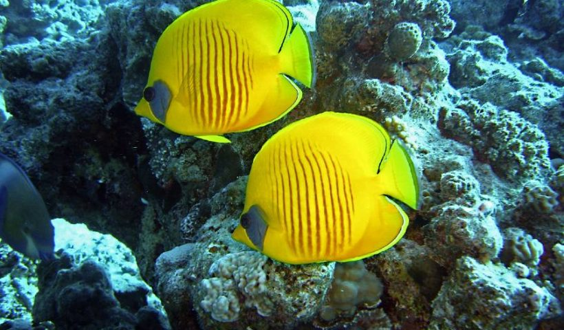 reef-insurance-conservation
