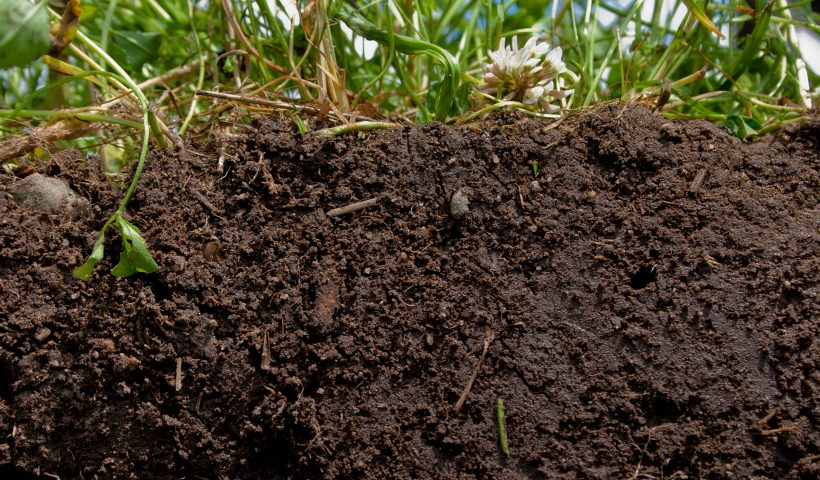 A Soil-Science Revolution Upends Plans to Fight Climate Change