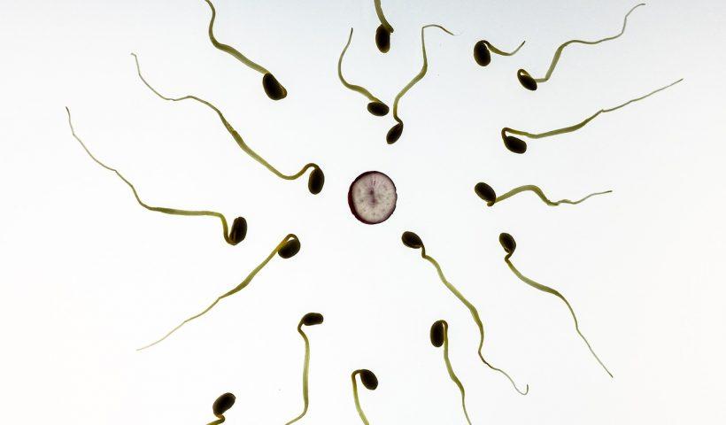 sperm-male-fertility-toxins