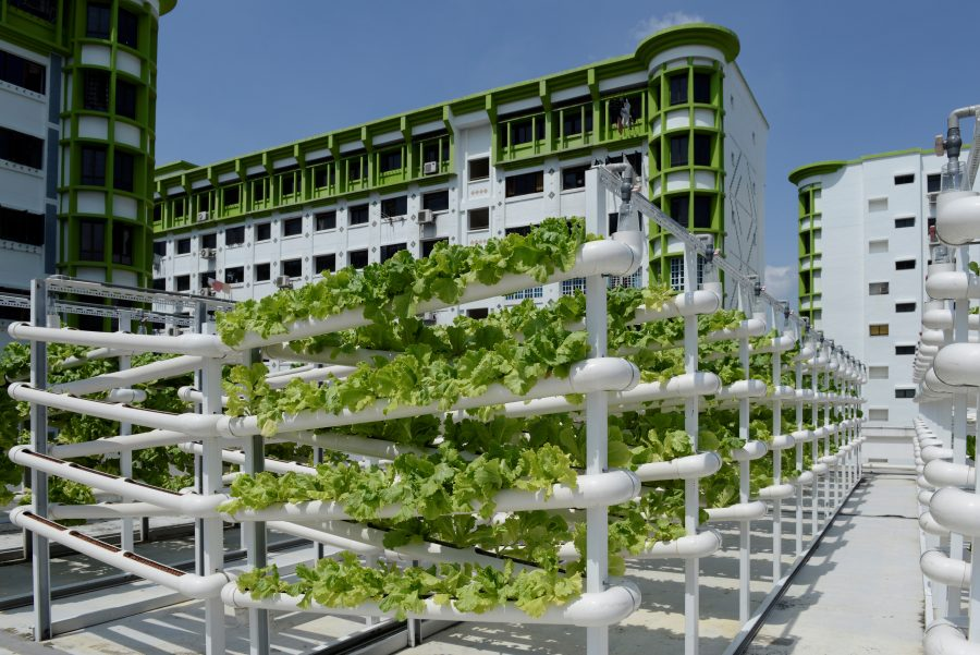12 steps to decarbonise your city